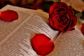 Open-Bible-With-Roses.jpg